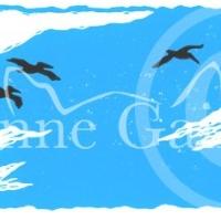 pelicans-800